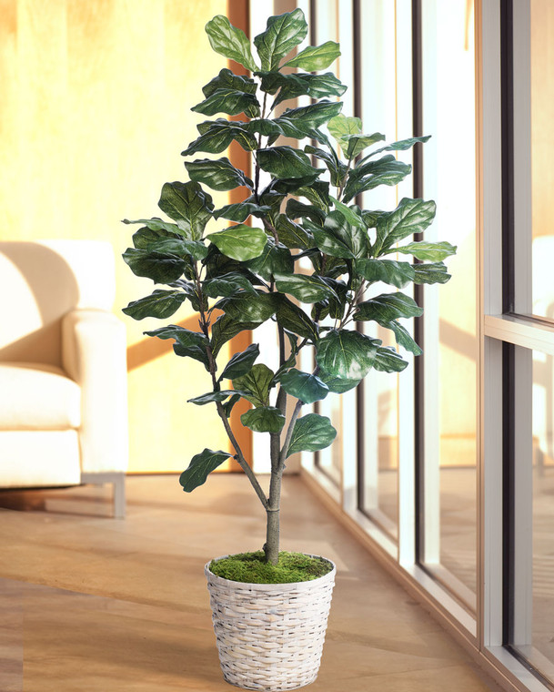 5' Single Trunk Fiddle Leaf Fig<br>Silk Tree