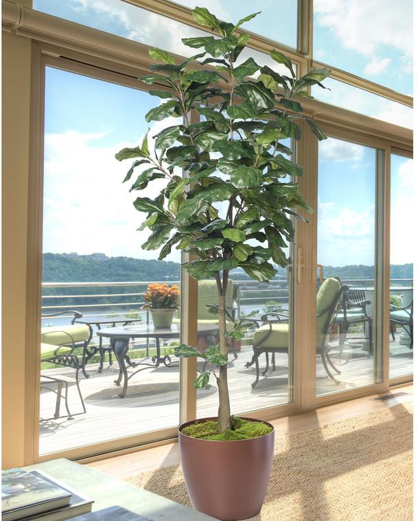 7' Single Trunk Fiddle Leaf Fig<br>Silk Tree