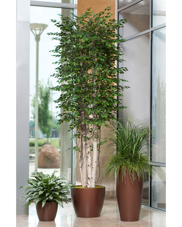 Tall Deluxe Silver Birch - 10ft