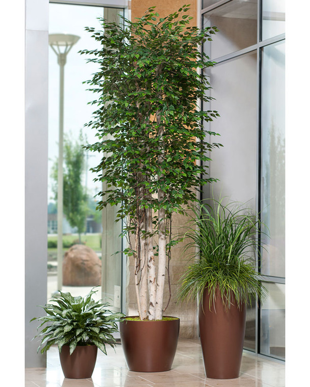 Tall Deluxe Silver Birch - 14ft