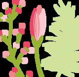 Floral Garden / Nature