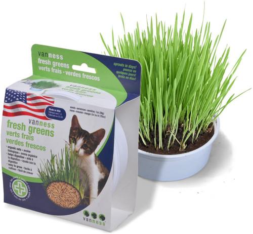 VanNess Cat Grass Starter