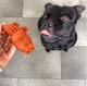 Whimzee Alligator Dog Dental Chew