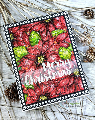 Wild Poinsettia Background