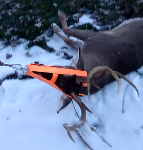 Straight Ahead Deer Drag