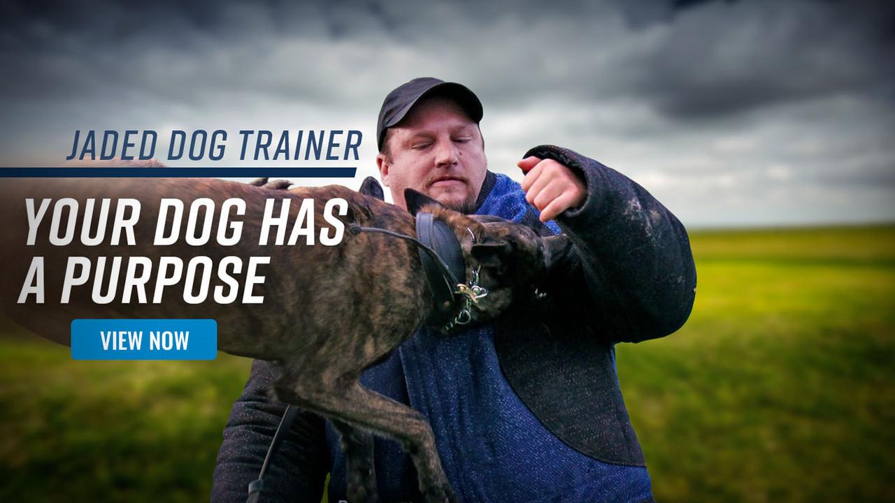 K9 Spotlight Interview: The Jaded Dog Trainer