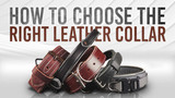 How to Choose a Heavy Leather Dog Collar