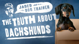 The Jaded Dog Trainer: The Truth About Dachshunds
