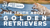 The Jaded Dog Trainer: The Truth About Golden Retrievers