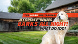 The Jaded Dog Trainer: My Great Pyrenees Barks All Night Long