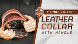 Ray Allen Ultimate Padded Collar - Luxury Leather Dog Collar