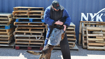 K9 Dog Bite Work Training Guide For Police and Military