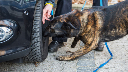 Making Dog Training Fun and Educational for Trainer and K9