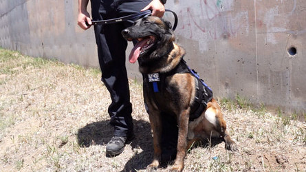 Law Enforcement Dogs vs The Dog Sport