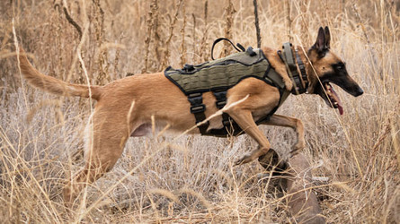 Introducing the tactical NOMAD I.H.S. Dog Harness
