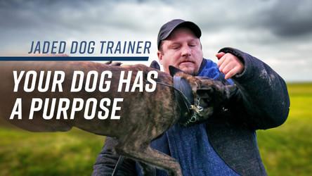 K9 Spotlight: The Jaded Dog Trainer