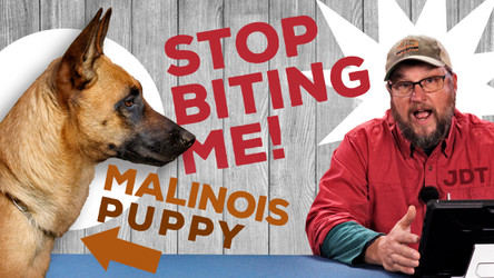 The Jaded Dog Trainer: My Malinois Won't Stop Biting Me!