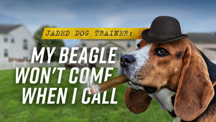 The Jaded Dog Trainer: My Beagle Won't Come When I Call It