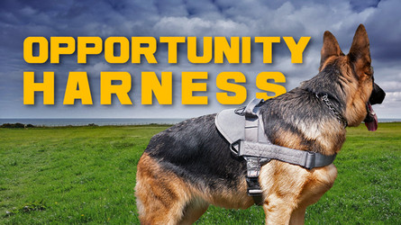 Opportunity Harness - A Simple, Versatile Tactical or Service Dog Harness