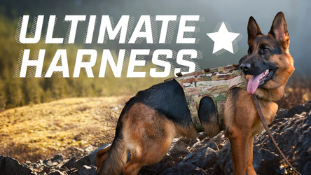 Ray Allen Manufacturing's Ultimate Harness - Most Durable Tactical K9 Harness