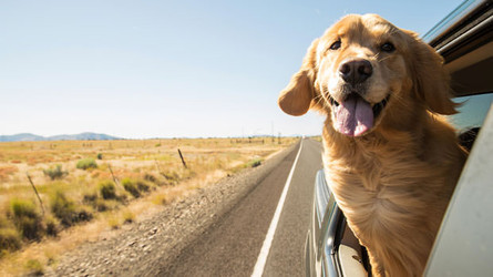 Pet Hacks: 5 Ways To Make Your Road Trip With Your Dog Stress-Free