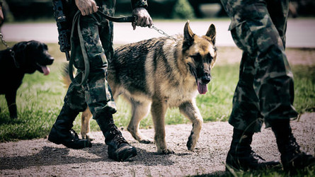 Veterans and Service Dogs: What You Need to Know About the Process