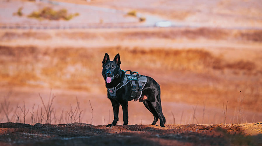 K9 Spotlight: Tristan Townley and Yagami