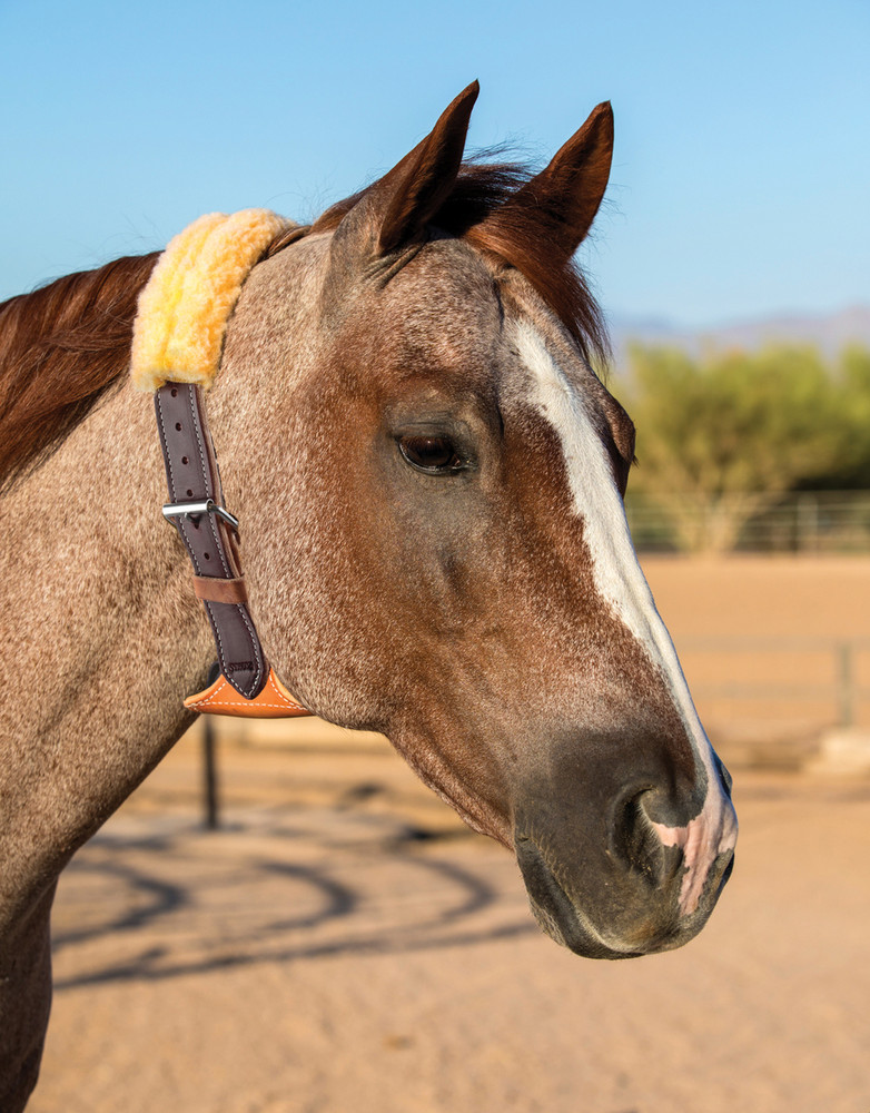 Brown Dare Cribbing Collar with fleece cover shown on horse.