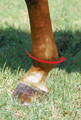To determine the correct fit of the Professional's Choice SMBII boots measure around the fetlock.