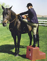 High Country Plastics 2 Step Horse Mounting Block; a great step and best seller; Tan