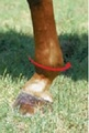 To determine the correct size of Brrr 2XCOOL boots you need, measure around the widest part of the horse's fetlock.  then read the instructions on the sizing chart found in the pictures area.  Measure all 4 legs.