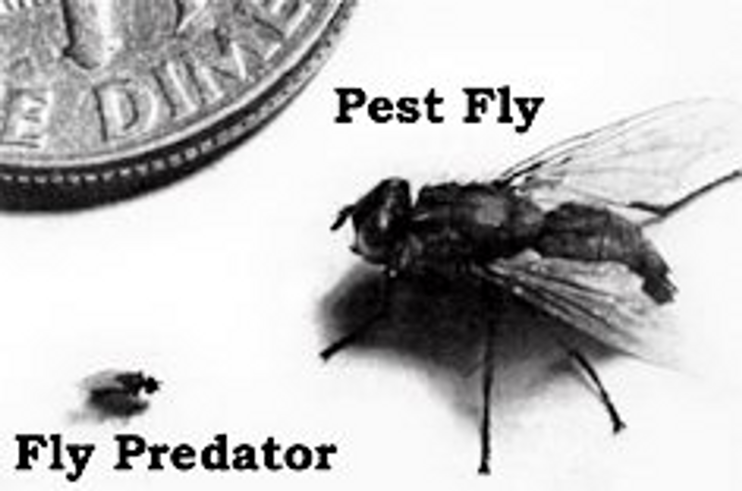 Fly Predators Can Solve Your Fly Challenges