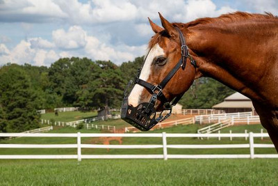 The GreenGuard Grazing muzzle along with the GreenGuard Grazing Muzzle halter are the best grazing muzzle systems we've used.  We were so impressed we became dealers!