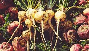 maca root plant