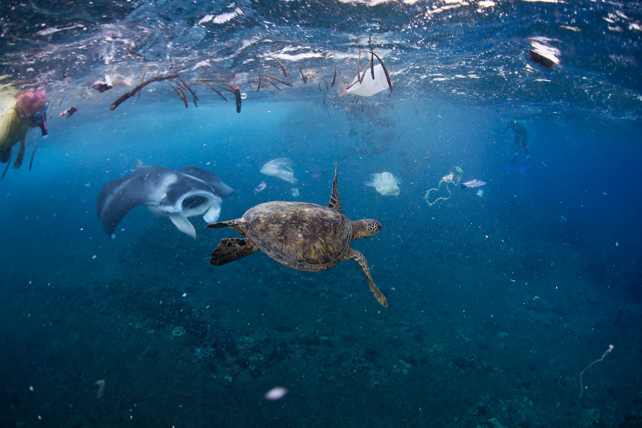 ocean-trash-ocean.nationalgeographic.com-.jpg