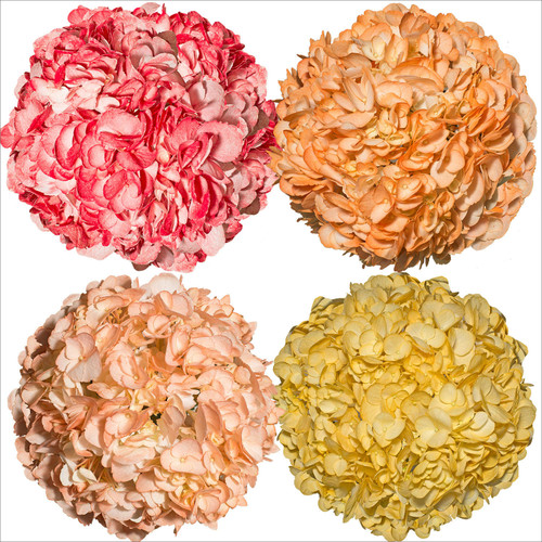 Hydrangeas, Hand Painted Fall Colors (26 stems) - *Special Order