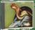 CD - Camel (debut album)