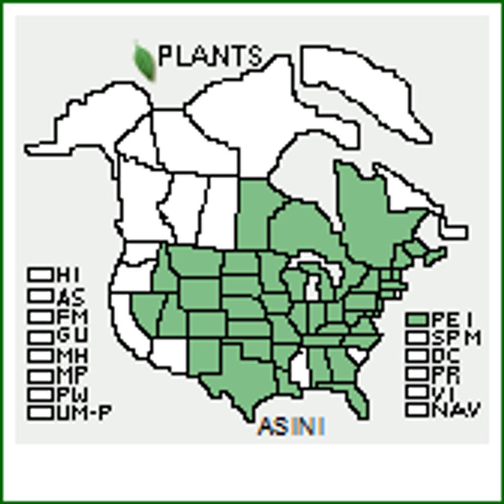 Asclepias incarnata  Swamp Milkweed 1 gallon