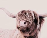 Highland Cow Mural