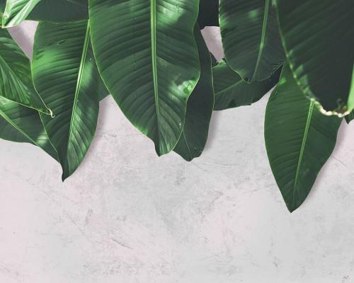 Leaves Wall 2 Mural