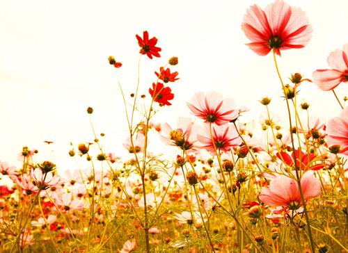 Flower Meadow 2 Mural