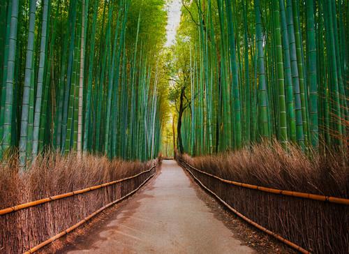 Bambu Walk