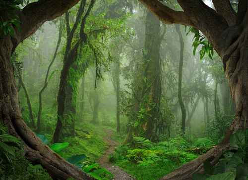 Tropical Forest Mural