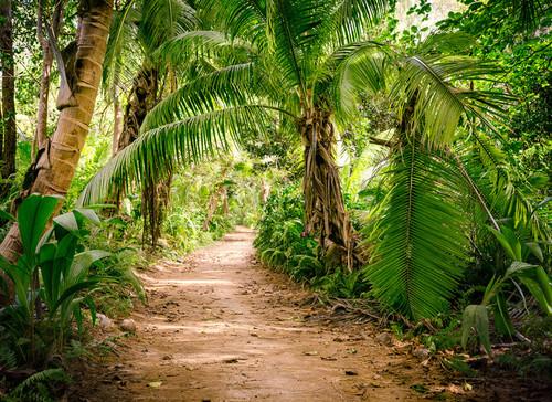 Palm Walk Mural