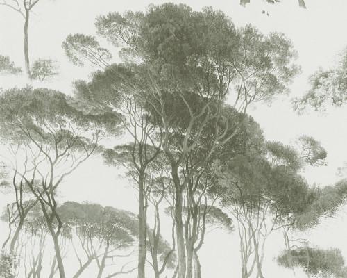 RW95376512A Trees, Landscape wallpaper