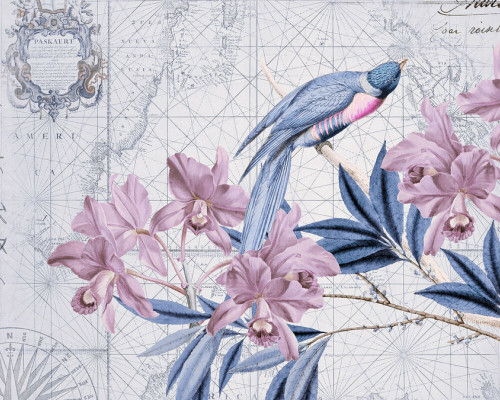 Floral Bird on Maps 2