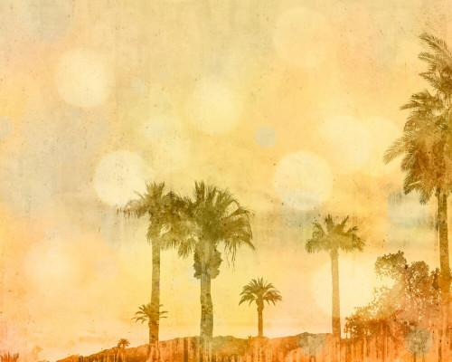 California dreaming orange