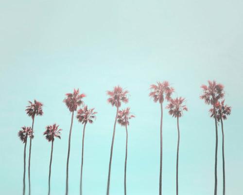 Palm trees 2