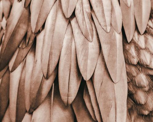 Banana leaf brown