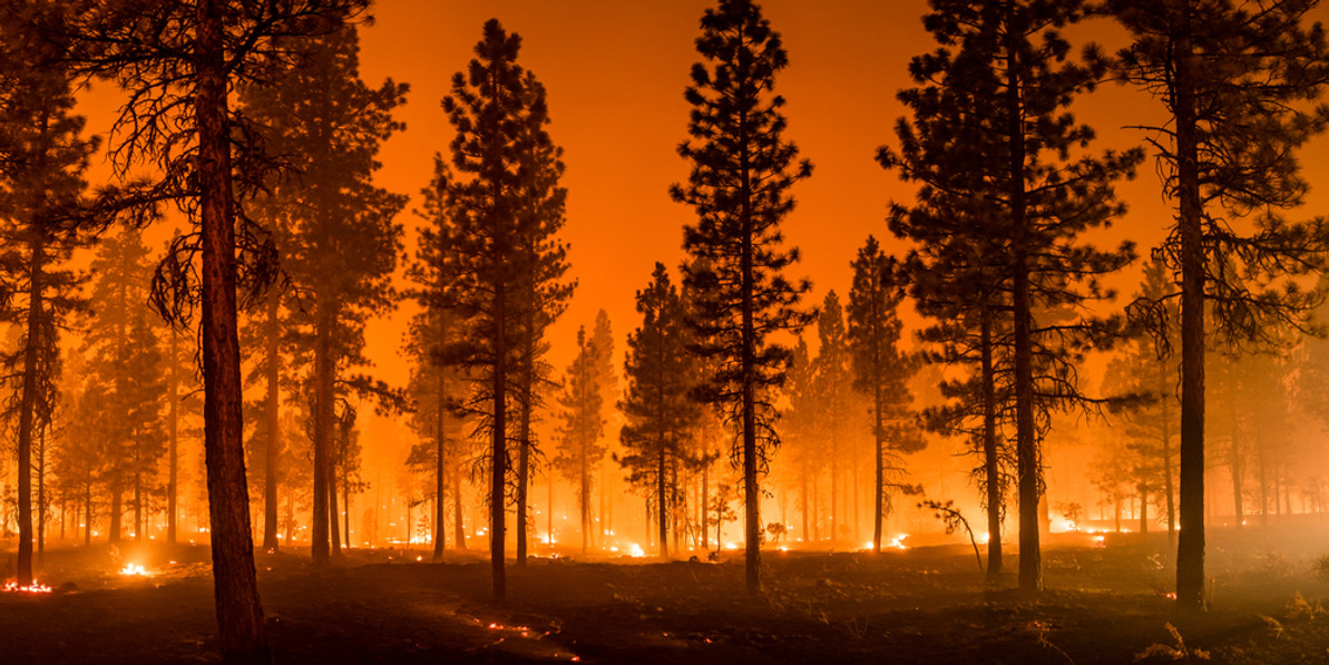 Will Fire Retardant Products Hurt My Plants?